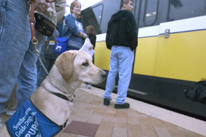 "Puppies, ""puppy raisers"" from Southeastern Guide Dogs and DART Paratransit Travel Trainers wait to board a DART train."
