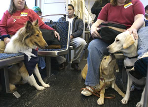 The puppies rode DART trains to get first-hand experience using public transportation.