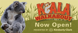 Koala Walkabout